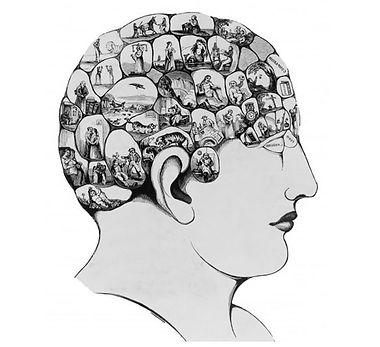 brain-right.jpeg