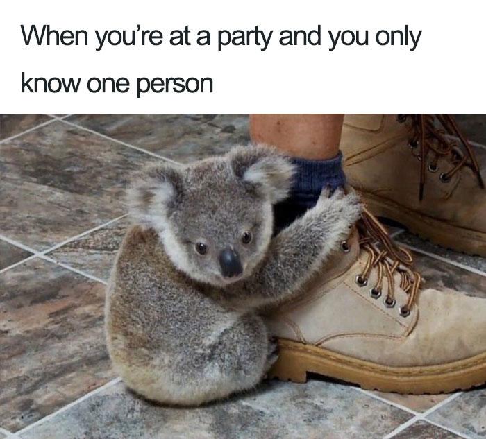 funny-introvert-meme-3-5ba8df253c709__70