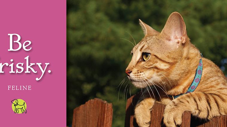 Cat Collars by Up Country