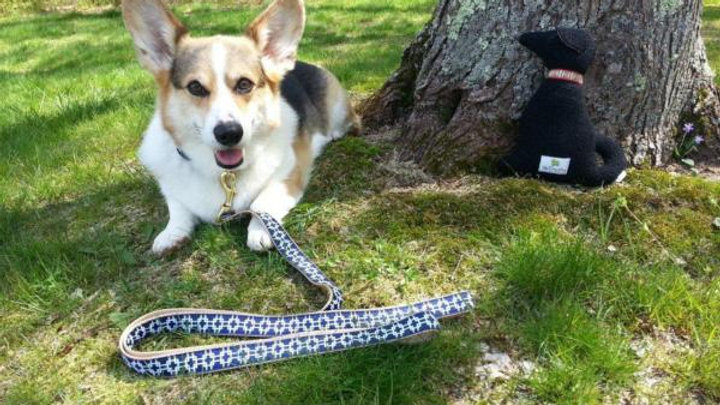 Up Country Dog Collars part2