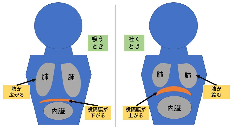 呼吸のワーク「ロングブレス&ファストブレス」説明用画像.png