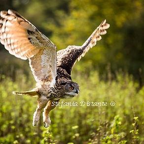 owl square.jpg