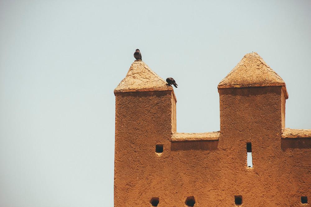 Rabat, birds.jpg