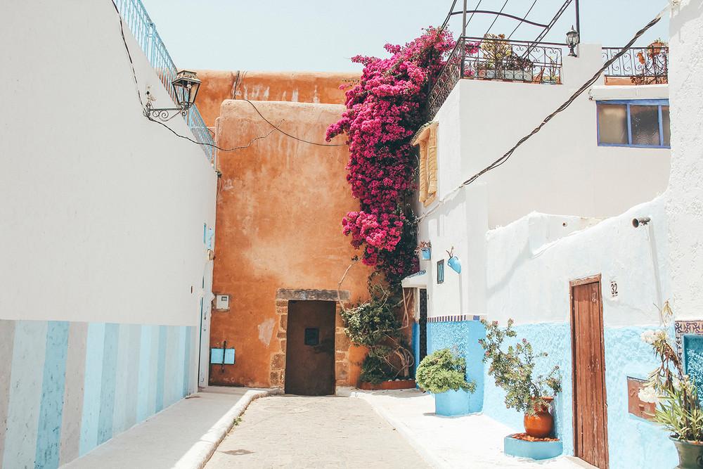Rabat flower.jpg