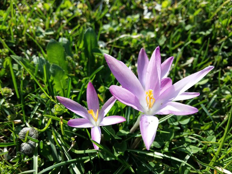 Herbstzeit, Pflanzzeit - Tolle Zwiebeln für kunterbuntes Frühlingserwachen