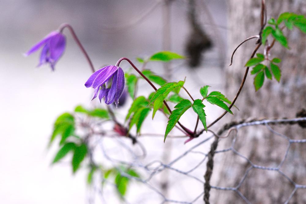 Pflanzenwahl