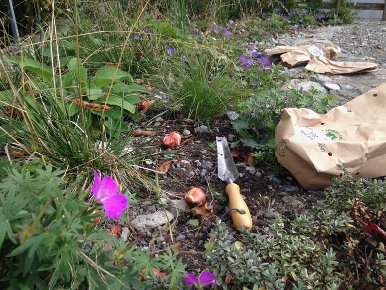 Eine kleine Pflanzanleitung für Blumenzwiebeln