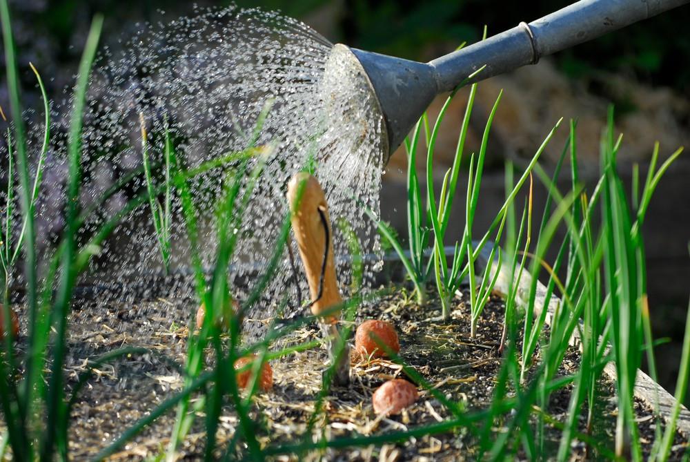 Seedballs wässern