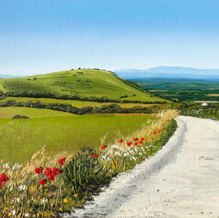 South Downs Way in June
