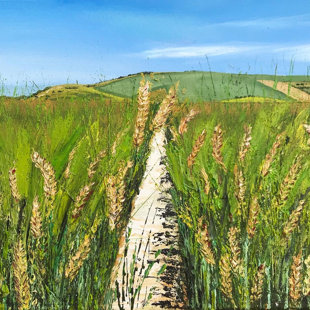 Wheat fields before Ditchling Beacon