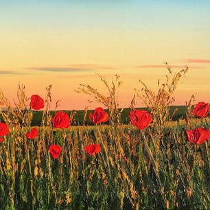 Poppies at Golden Hour