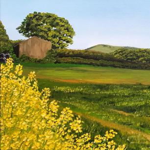 Rapeseed Fields and Wolstonbury Hill