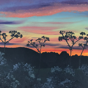 Cow Parsley at Sunset