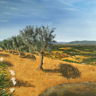 Portugese olive trees