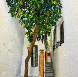 Cordoba orange tree