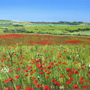 Poppy field above Brighton