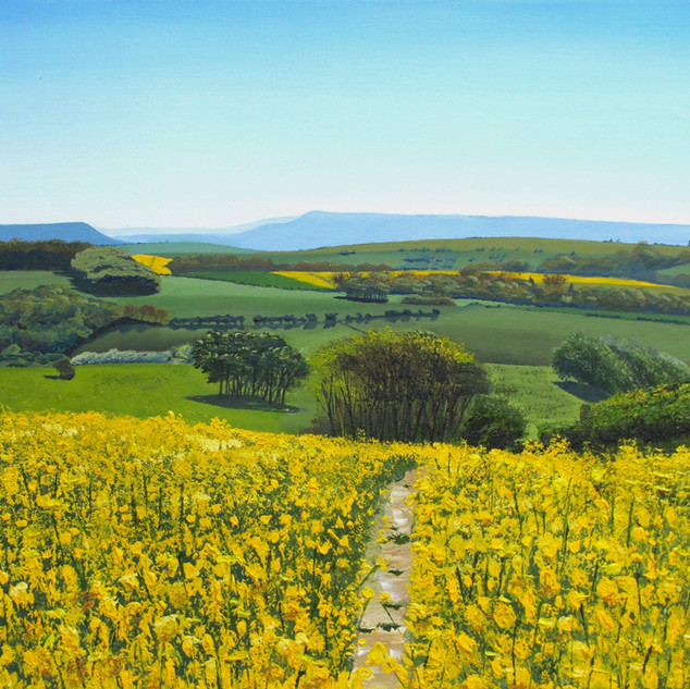 Rapeseed fields beyond the Beacon