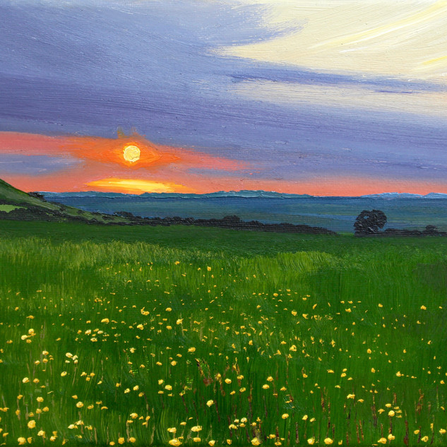 Buttercups on the Downs