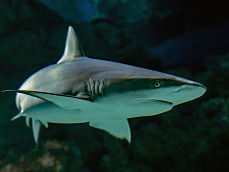 Sharks Move Forward (So Should Your Business)