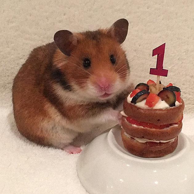 Making A Hamster-safe Birthday Cake