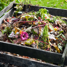 Composting 101 Guide