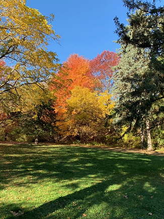 Fellowship Circle Autumn Trees.png