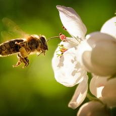 Pollinator Garden Guide
