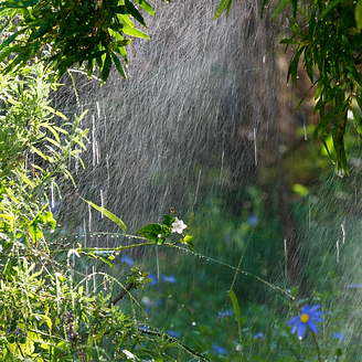 Rain Garden.png