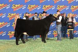 Reserve Champion ORB Heifer