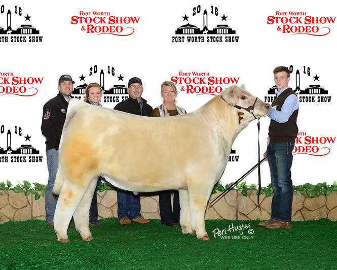 Branded Class 9 Steer Fort Worth