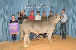 Grand Champion Steer Comal County