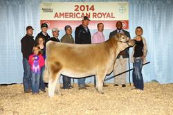 Champion AOB 2014 American Royal