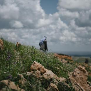 Understanding the Role of Gender in the Yazidi Genocide