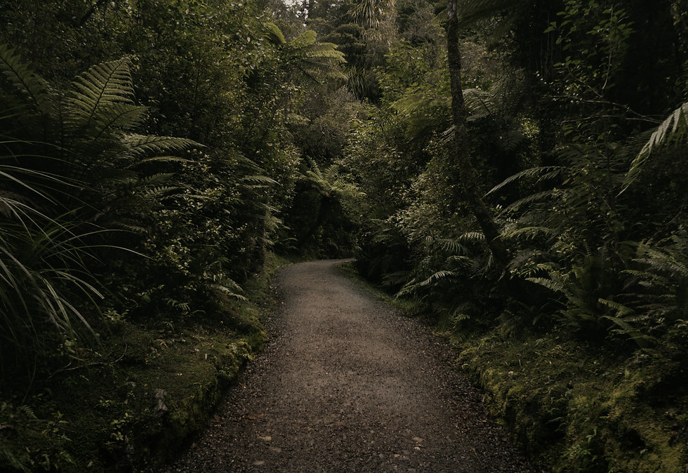 dark winding gravel path surrounded by a verdant green forest