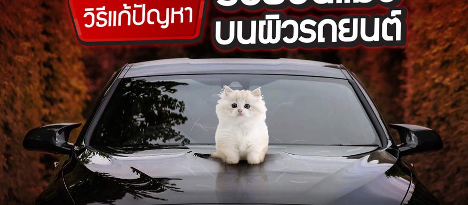 รอยขนแมว เกิดง่ายแต่แก้ยาก