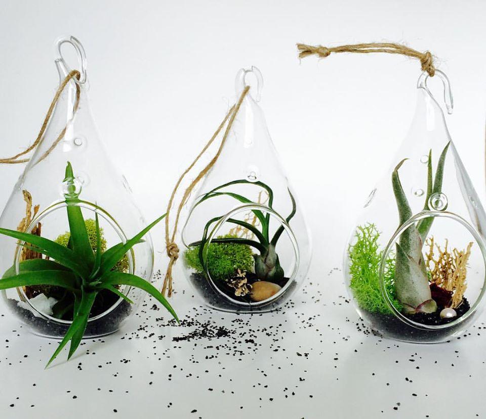 Micro Terra