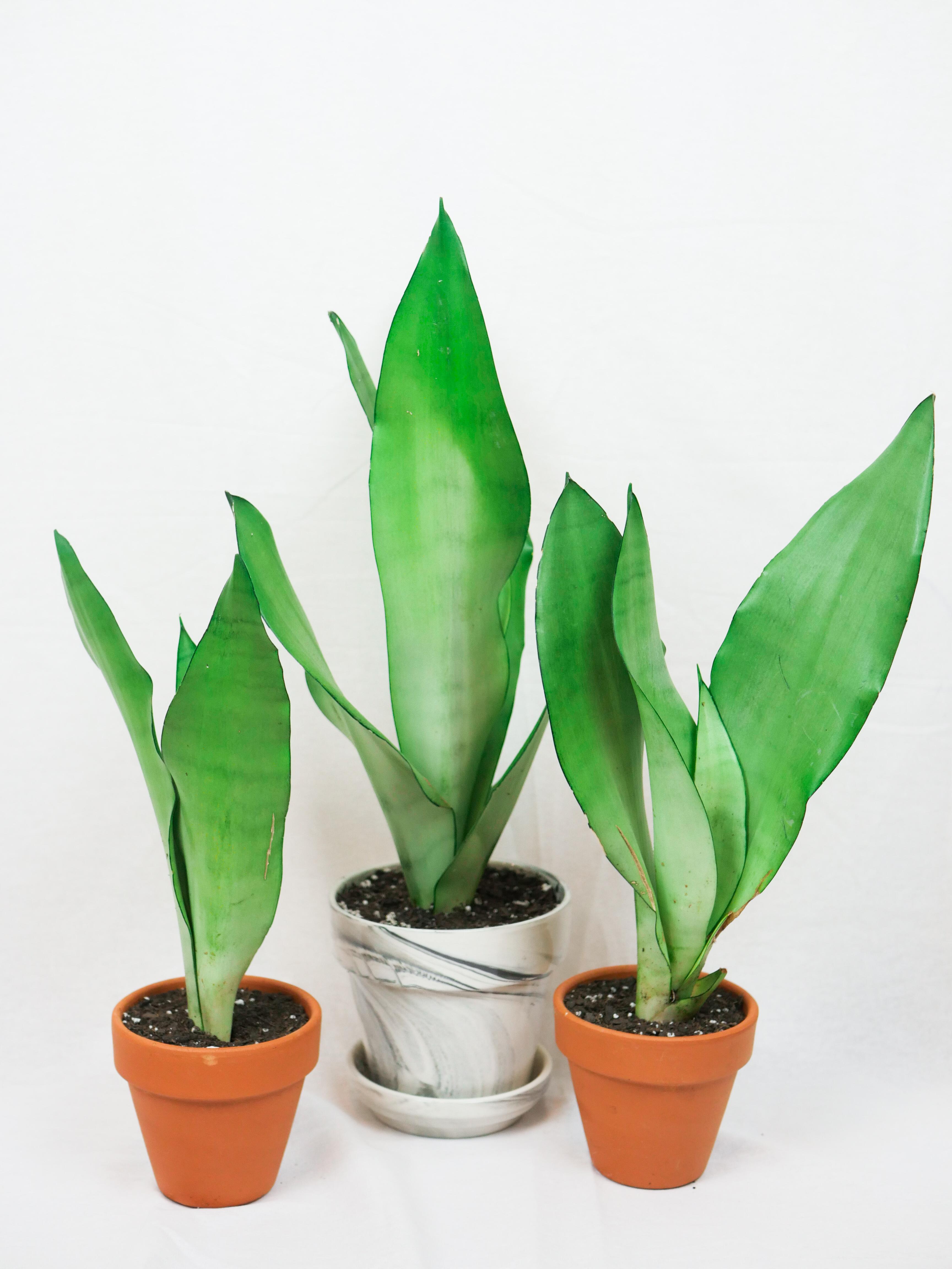 Plant Shoppe