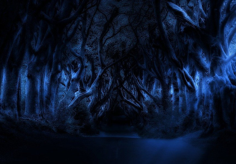 trees-5166974_960_720.jpg
