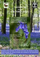 A bluebell walk.jpg