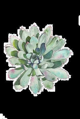 paper-succulent-plant-watercolor-paintin