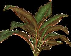 botanical-illustration-botany-plant-draw