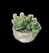 succulent-plant-container-garden-housepl