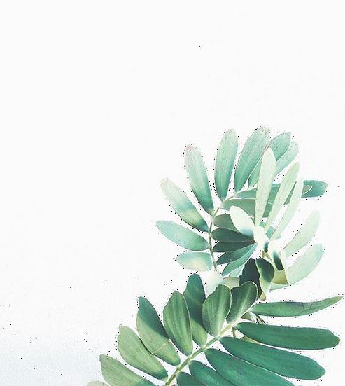 leaf-watercolor-painting-arecaceae-watercolor-leaves-746f56e2d77981d5f621b43dc5ff7832.png