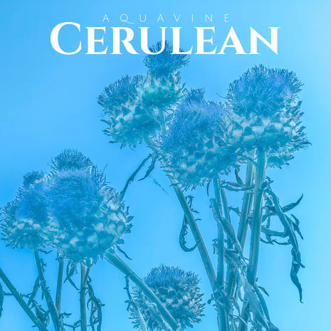 AQUAVINE - Cerulean