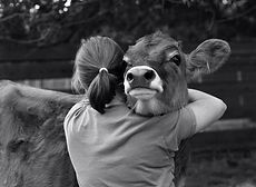 Woman hugs cow