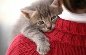 Animal reiki helps cats