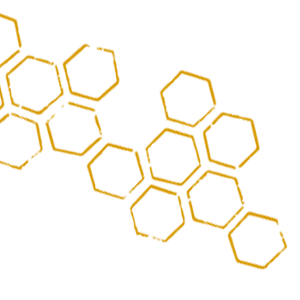 alveoles.png