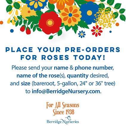 Rose Pre-order.jpg
