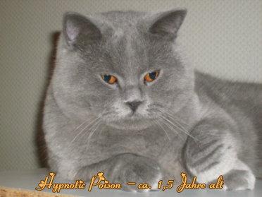 hypnotic_poison_1_5_jahre_alt
