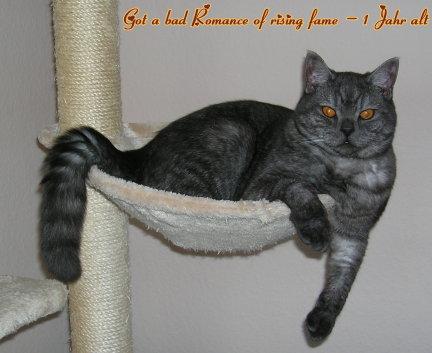 Romeo_1_Jahr_alt_neu